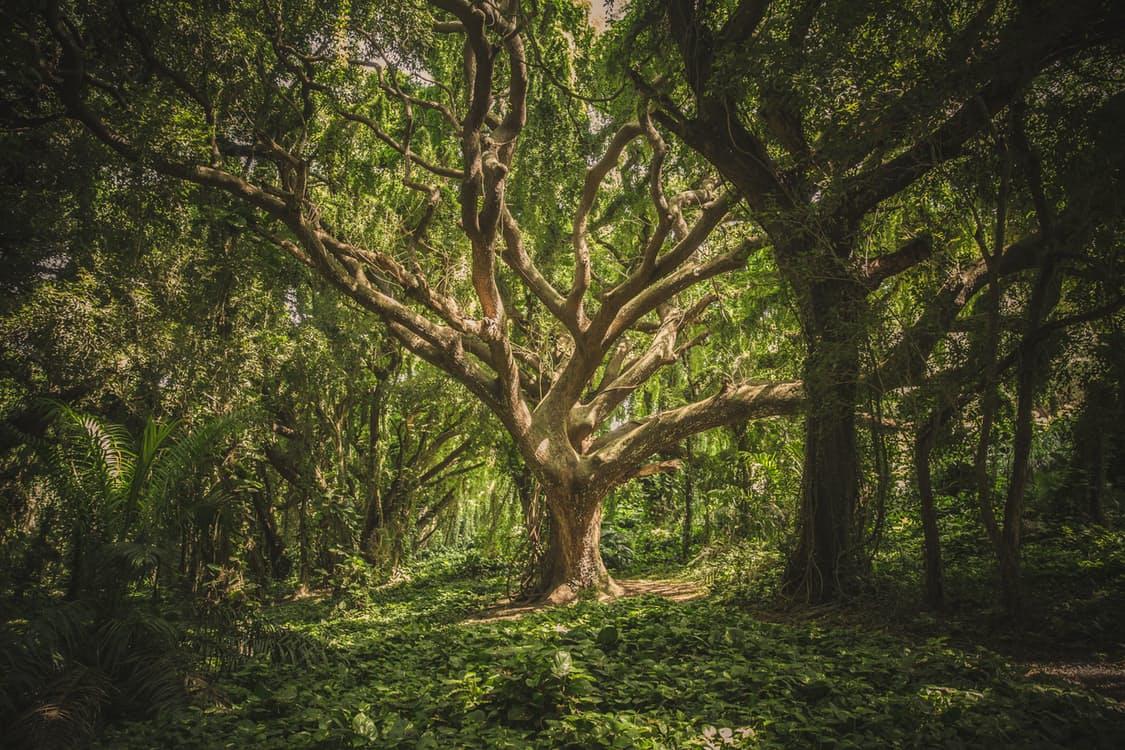 Foto di un albero nella foresta.