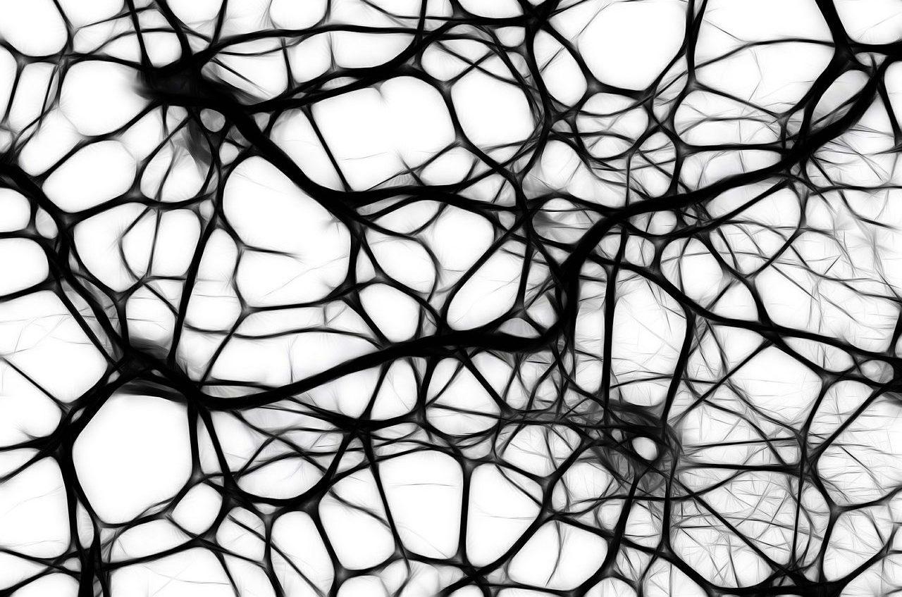 Foto di un rete neurale.